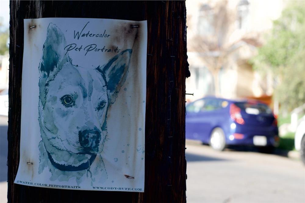 Portraits of a Dog